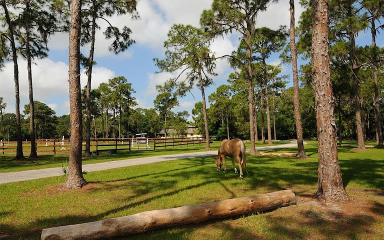 Front Pasture With Our Schooling Ring And Driveway Leading To Our Vacation House, Attached 1 Bedroom Suite and 1 Bedroom Cottage Properties!