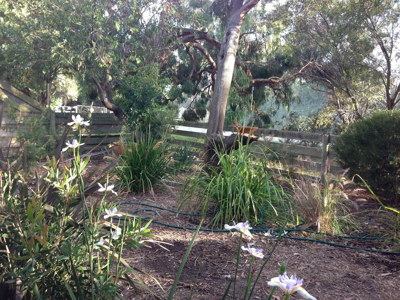 Lovely 3 bedroom home in a gorgeous native garden.