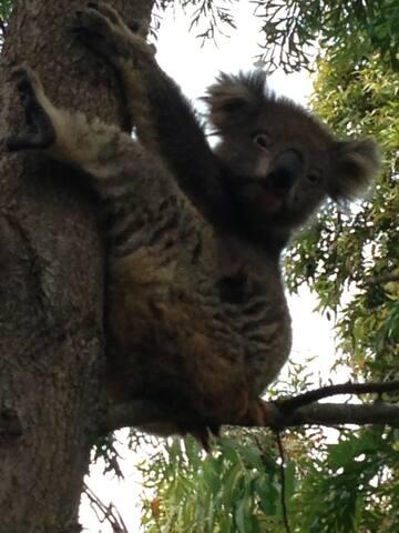 100 metres from koala reserve
