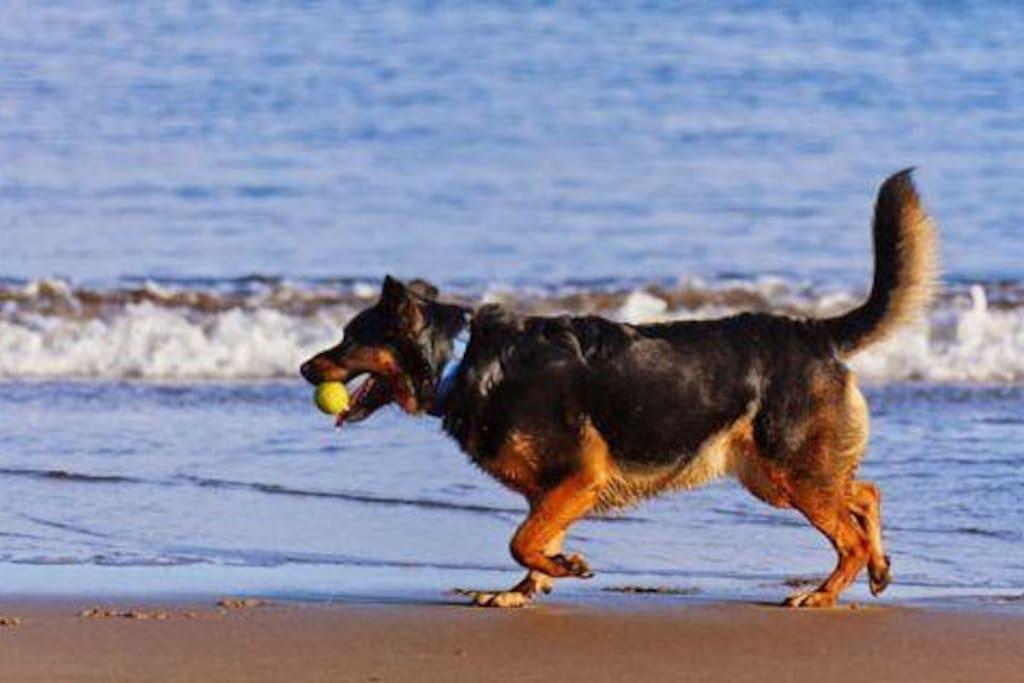 """Ferien auf Sylt –  mit Hund noch viel schöner!  Wir vermieten unsere gemütliche 2-Zimmerwohnung in ruhiger Lage auf Sylt gern an Menschen, für die ein Urlaub ohne Hund auch nix is'! •Lage: Braderup – direkt an Braderuper Heide, Weißem Kliff und Wattenmeer gelegen – wunderbar für ausgedehnte Spaziergänge,  1 km bis Wenningstedt •Wohnung """"Sylter Heide"""": Erdgeschoss, 38 m², für 1 - 2 Personen  + 1 Hund, mit Süd-West-Sonnenterrasse und großer Wiese für herrliche Entspannung  •Preise: Je nach Saison: 50 bis 75 €/Tag   Einzelheiten unter: www.appartement-schmitz.de  >> Braderup"""