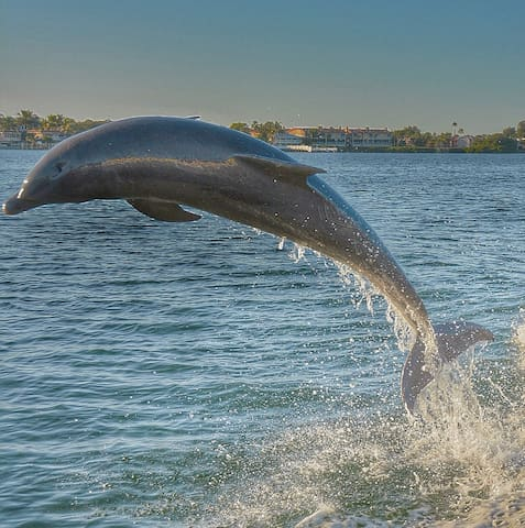 Amazing dolphin tour