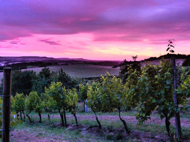 Vineyard Vacation - Brading - Pousada