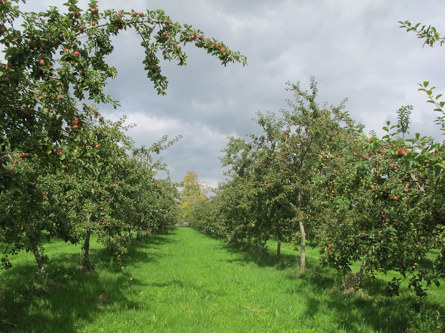 summer in the orchards