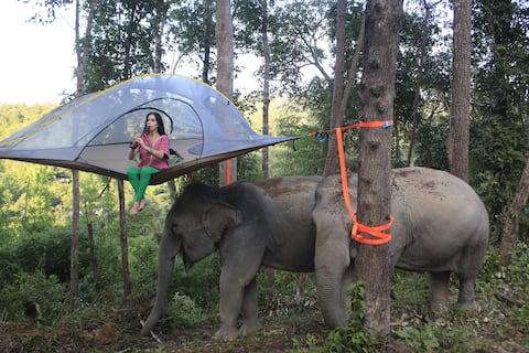 Karen Tribe Tree Tent + Elephant experience