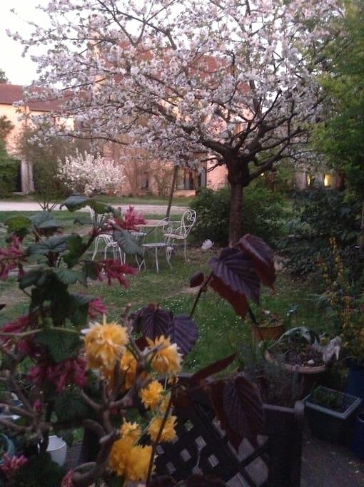 vue de la terrasse au printemps