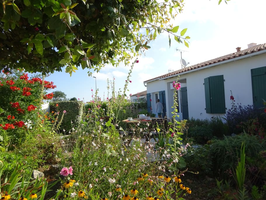 jardin avec roses trémières