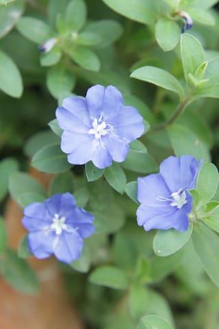ดอกฟ้าประดิษฐ์ภายในสวน