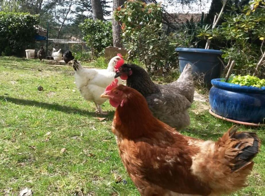 Oeufs frais tous les matins/Fresh eggs every morning