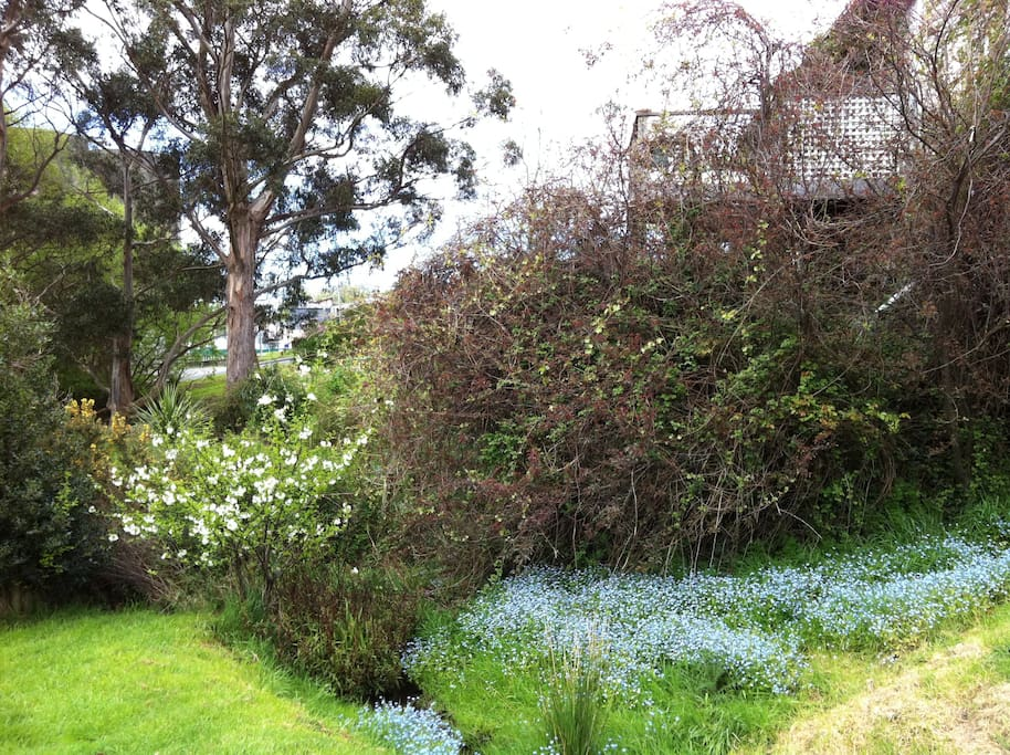 Back garden - when Forget-Me-Nots in bloom.