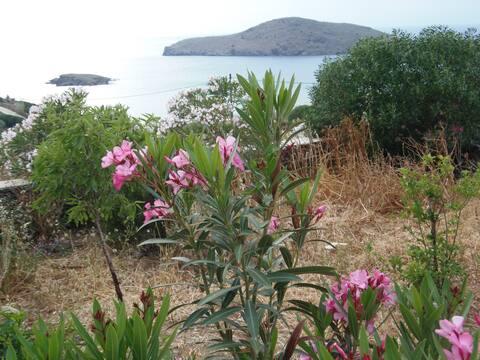 Exquisite location  beachside villa