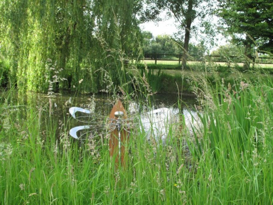 pond/ picnic area