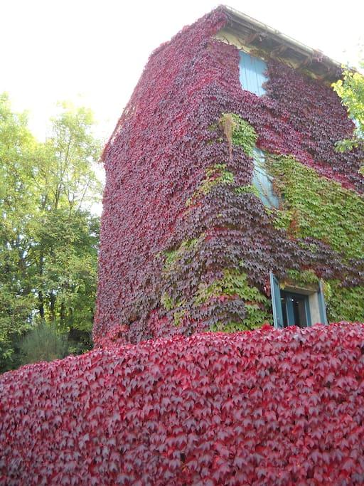 Un angolo della casa interamente coperto dalle foglie autunnali