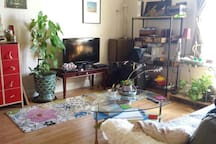 Bright living room, lush indoor plants, cable TV