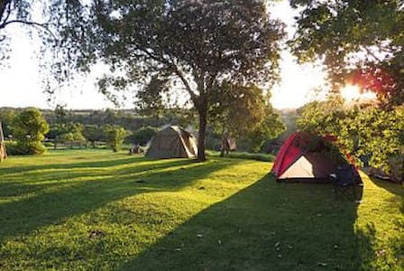 Camping - peaceful forest edge sites (own tent) - Rheenendal