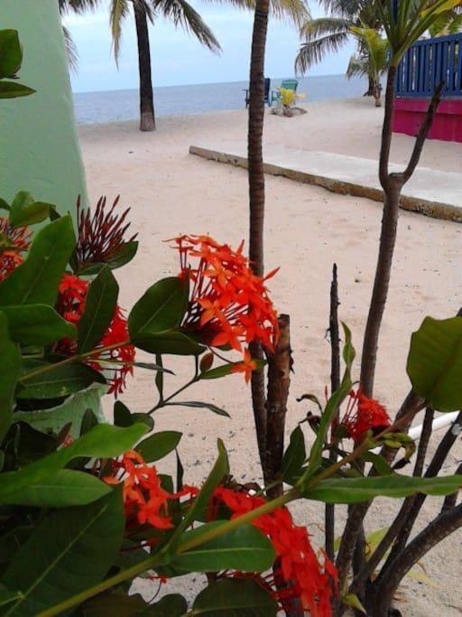 view of sea from your veranda. Beautiful flowers and breeze