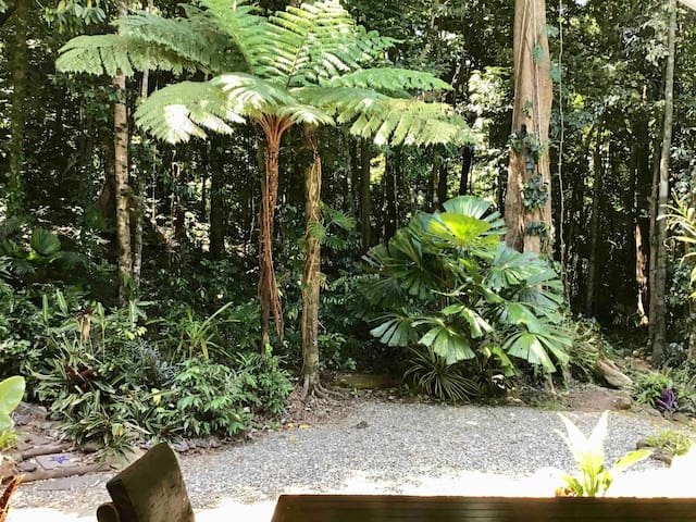 Forest Views Daintree  Holiday House