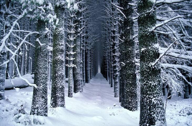 Visit Sugar Pine Walk