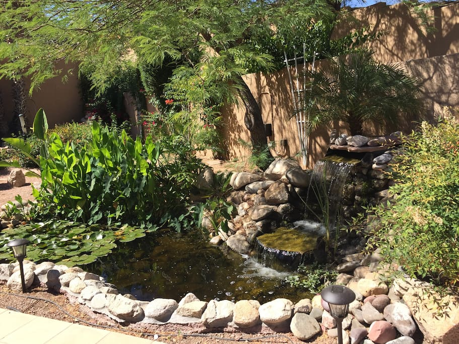 Tranquility of  our Backyard Pond