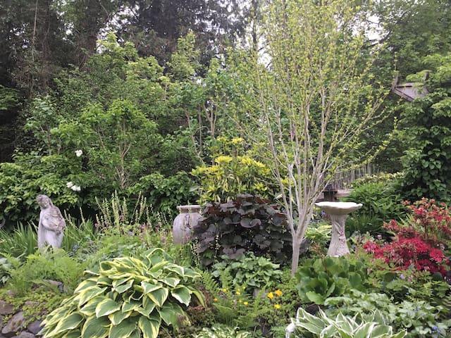 The lush back garden in summer