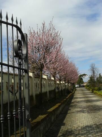 ingresso da cancello