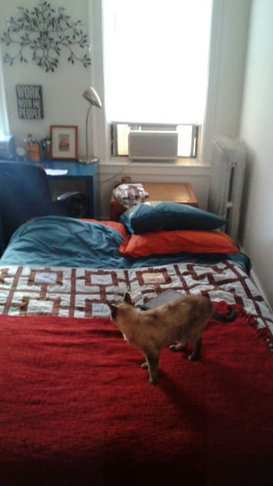 Futon opens up to comfy double bed - cat optional :)  (guest photo!)