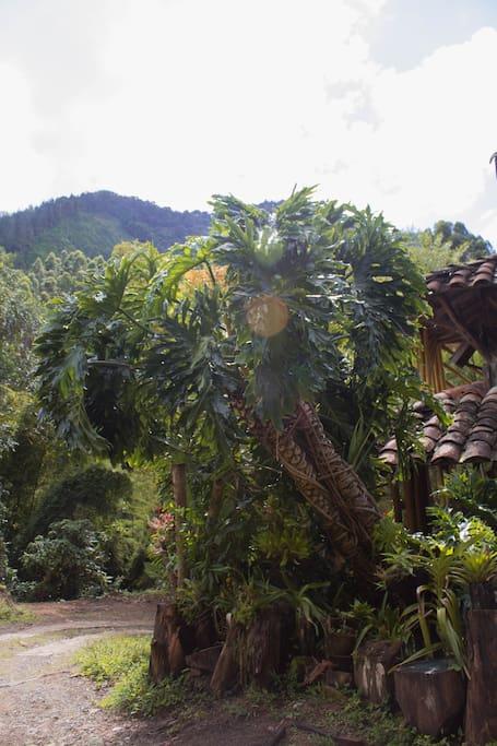Las plantas que con sus raíces protegen la casa