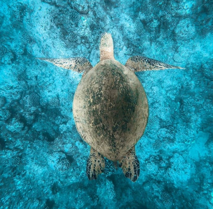 SOMETIMES we'll see the rare sea turtle
