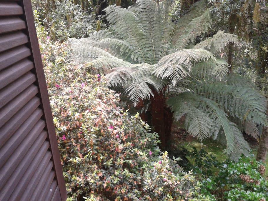 Vista  da janela de um dos aptos.