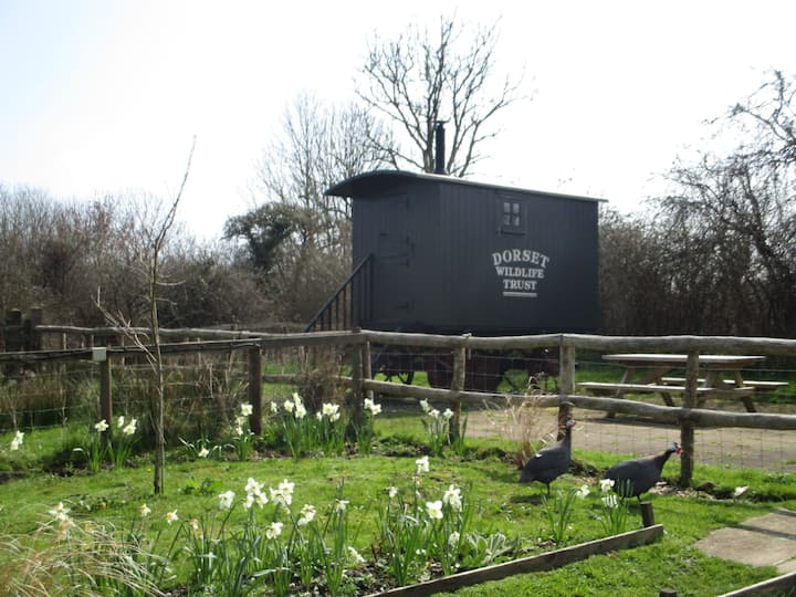 'The Orchard Hut '