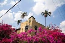 La Rosa de Ortega / Vista Exterior