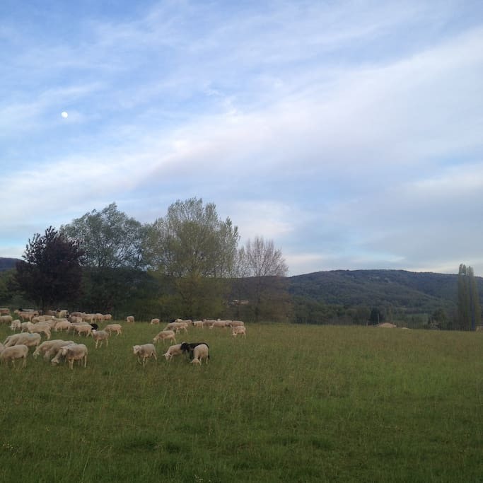 View from the garden...(sheep not always included!). In the garden there is a fire-pit for summer BBQ's, tables and chairs. You are welcome to use the garden.