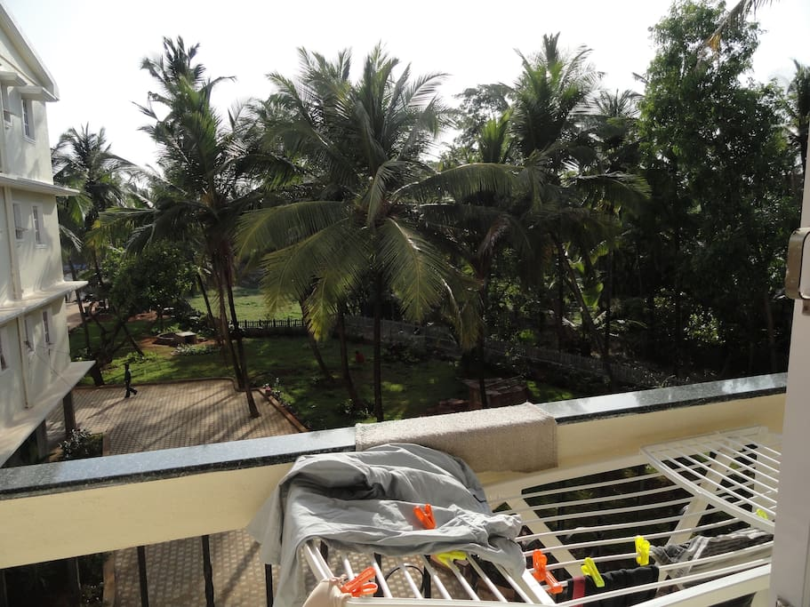 Sunny balcony facing coconut Tress