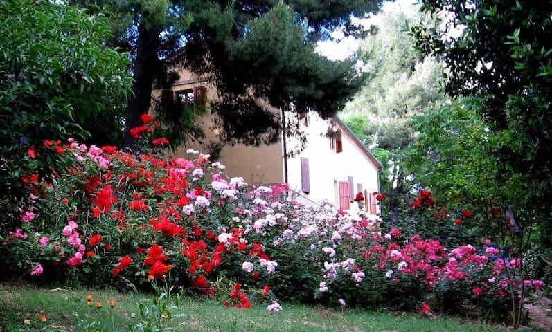 Casa nella quiete della campagna, plurifamiliare - Monte San Vito