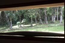 Visão do bosque a partir do corredor interno da casa