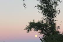Saliendo La Luna llena en la finca, junto al bambú.