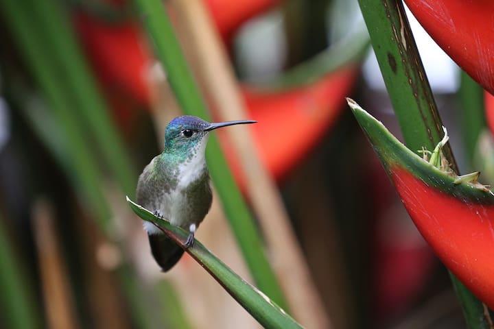 The Hummingbird Hostel (Room Colibri), Tzununa - Lake Atitlán - Cabana