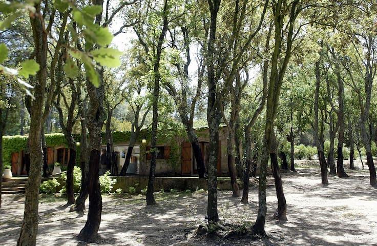 Le clos des Sabais – House by the Wood - Roquebrune-sur-Argens - Talo