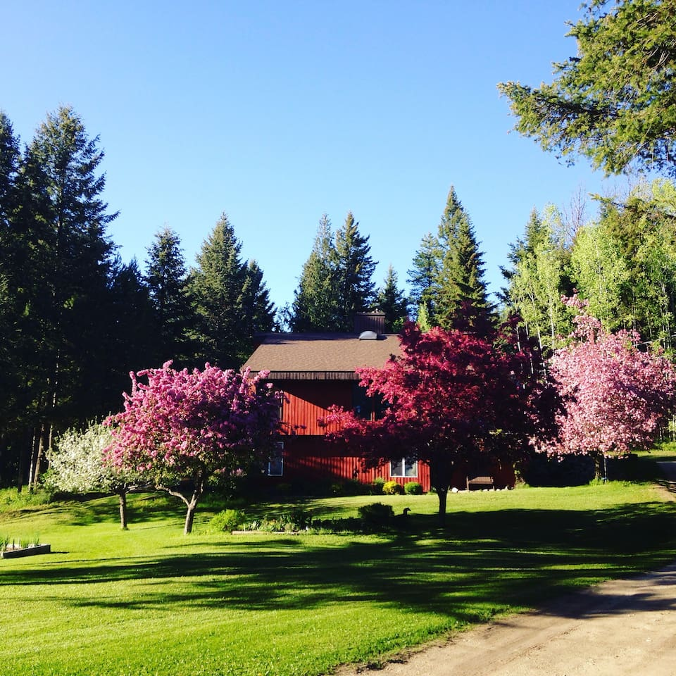 Crabapple trees in bloom in your front yard