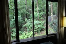 View from the living room window. All you see is woods from all directions!