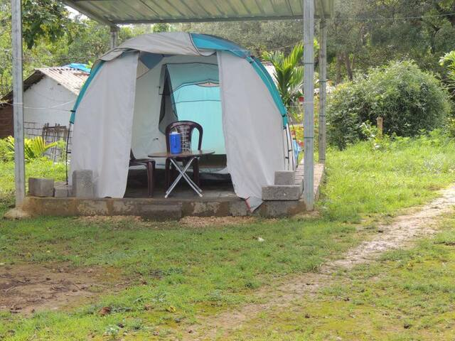 1BR Tent in Dandeli Jungle - Half Board Included
