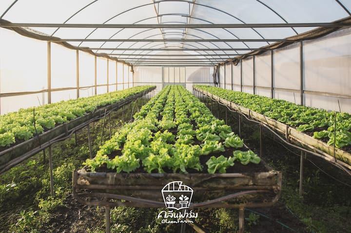 CLEAN FARM คลีนฟาร์ม ORGANIC FARM near Bangkok