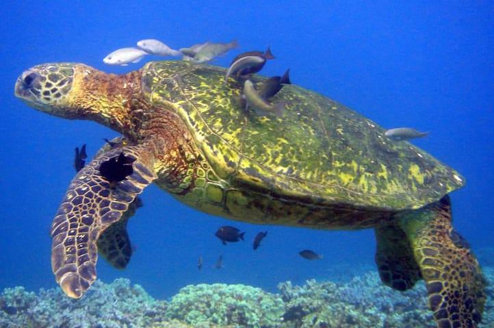 Best snorkeling ...