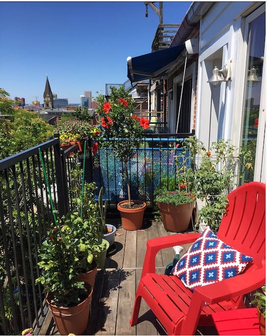 The balcony in the summertime. Last summer we grew dahlias, hibiscus, Belle of Woking Clematis, Star Jasmine (smells awesome) and tomatoes. We have even bigger plans this summer!