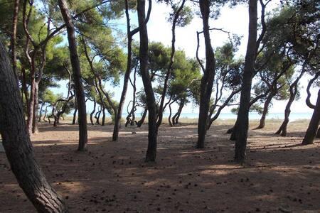 grazioso piano terra a 20 mt da mare e pineta - Pineto