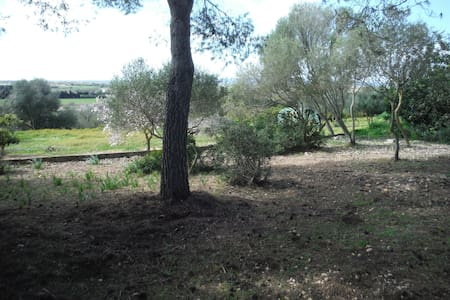 Come with your tent and camping - Manacor - Telt
