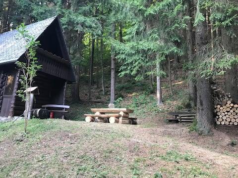 Uma cabana tranquila na floresta
