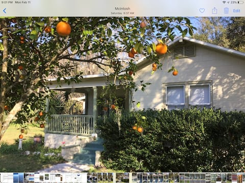 Orange Blossom in Historic McIntosh