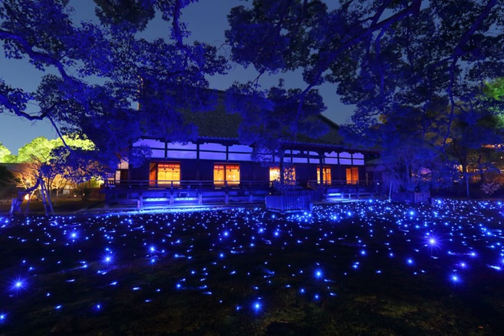 The autumn leaves light up is done here as a special worship at night as the autumn leaves season. It is a must see light-up where the garden is wrapped in blue light.