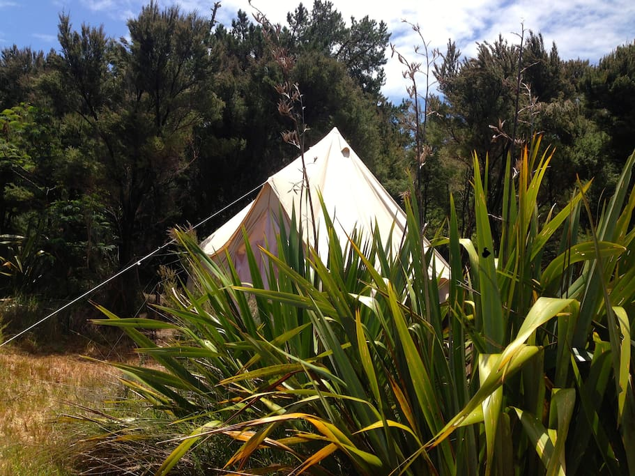 View of your tent from the outside kitchen both set in your own private clearing