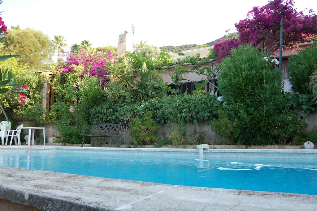Villa entourée de végétation luxuriante